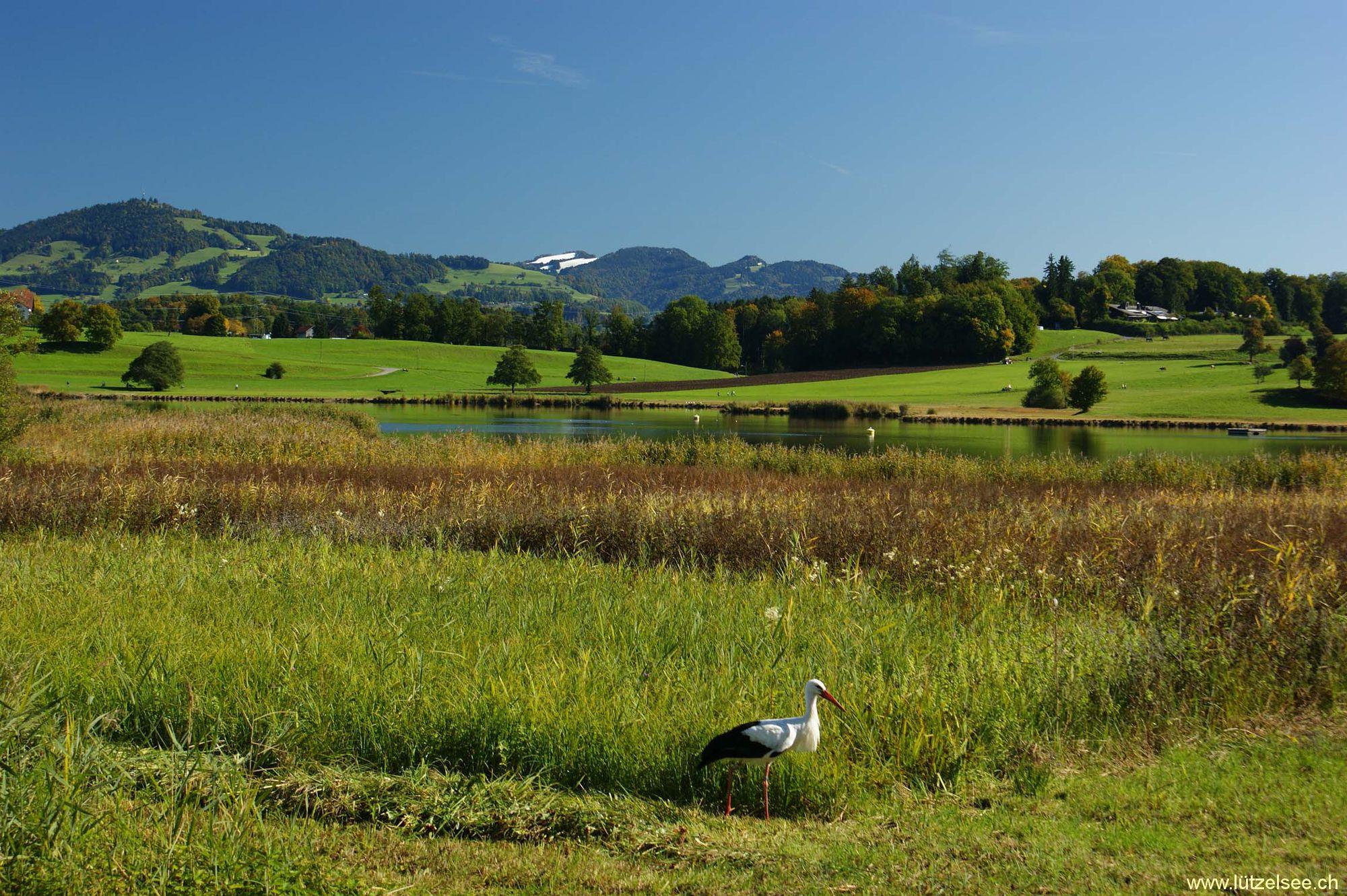 Einer der schönsten Seen im Zürcher Oberland.: http://www.luetzelsee.ch/